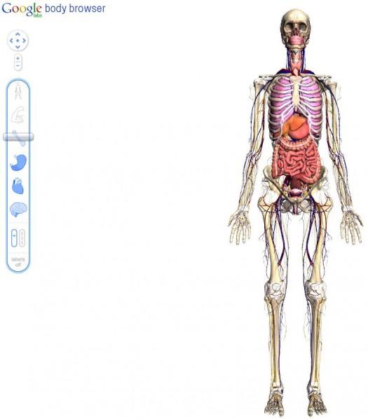 My Google Body